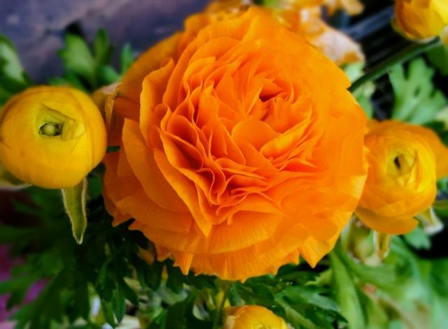 鮮やかなラナンキュラスの花